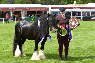 RWHS-Disciplines-900x600-showing